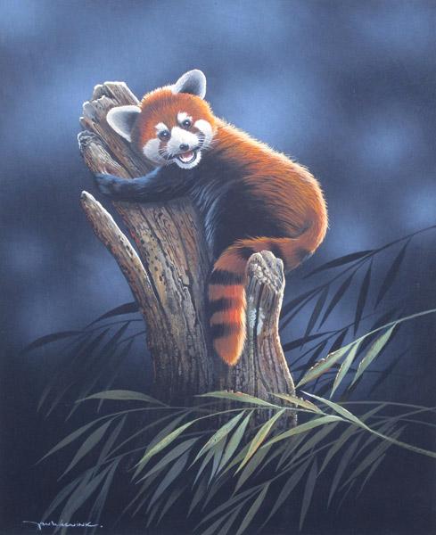 Kleine Panda, gouache op schilderskarton, afmeting 44x54cm