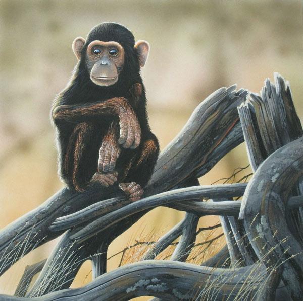 Chimpansee, gouache op schilderkarton, afmeting 44x44cm beeldmaat