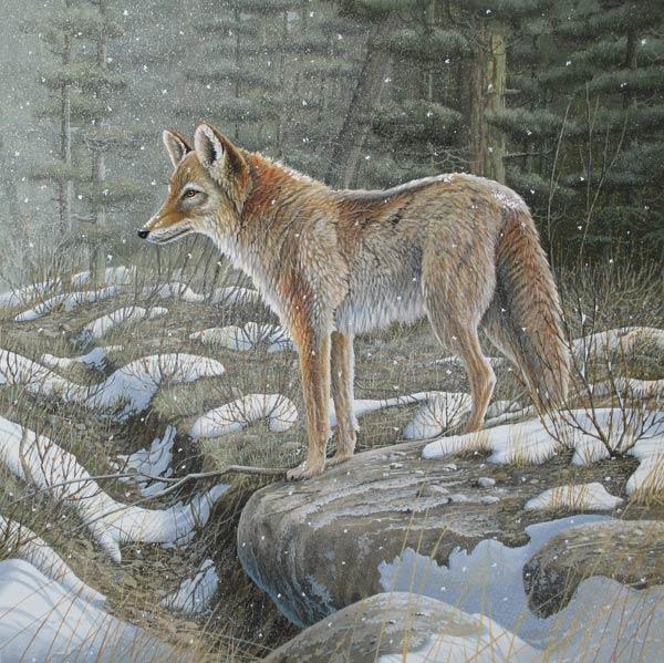 Wolf, gouache op schilderskarton, afmeting 39x39cm beeldmaat