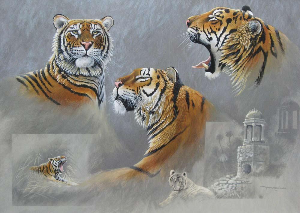 Tijgerstudie, gouache op schilderskarton, afmeting 50x70cm beeldmaat