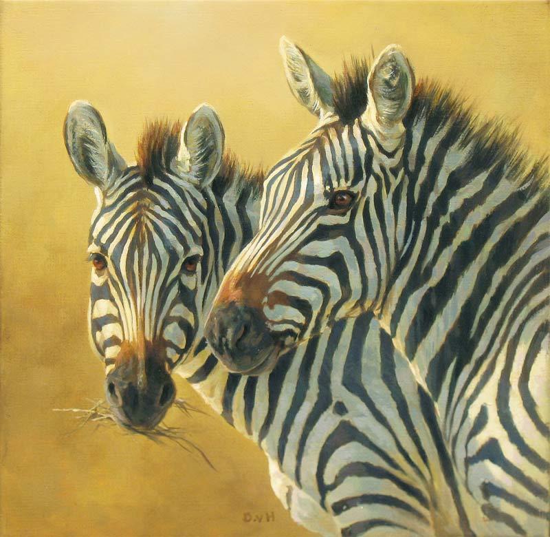 Twee zebra's, olieverf op linnen, afmeting 30x30cm doekmaat
